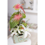Flores de abril-3590